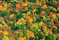 fm_bachus-woods-aerial-view-october